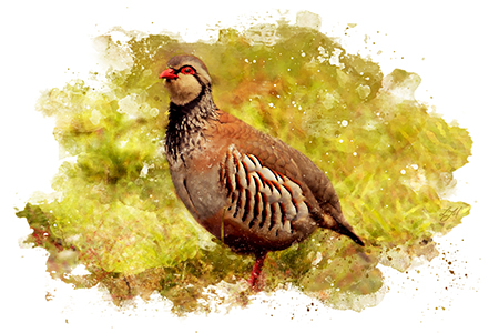 partridge shooting guide